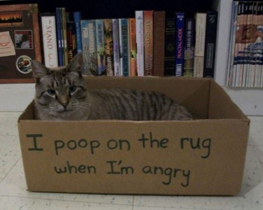 Cat Skinner Box Poop Rules